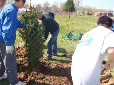 national tree planting projects